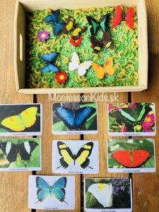 Motýle Safari
