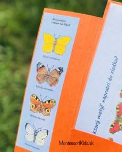 Lapbook Motýľ