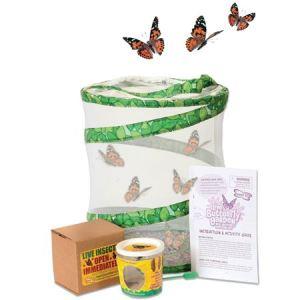 Motýlia záhradka