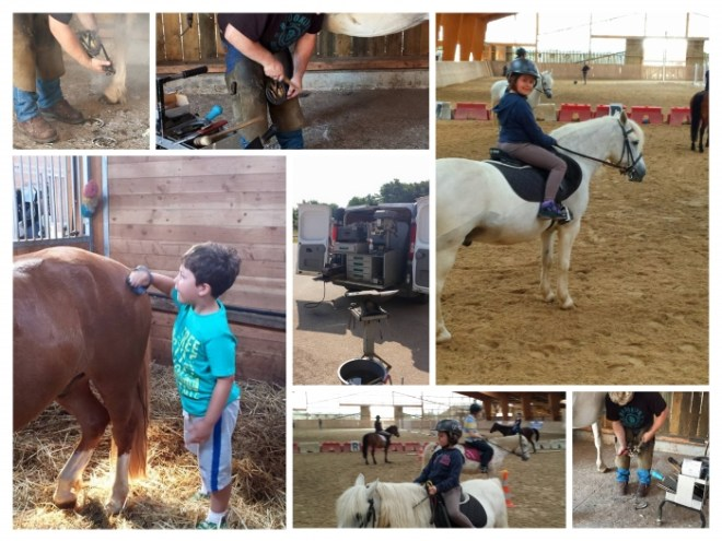 Collage cheval