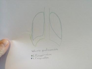 Volume pulmonaire à l'inspiration et à l'expiration