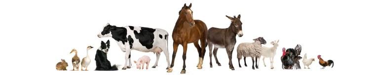 les-animaux-de-la-ferme.jpg