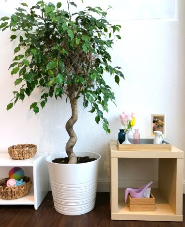 plants in the child's room classroom in montessori caring for nature, basket of balls, white monhtessori shelf, cube shelf, plant watering work purple mini ikea watering can, flower arranging, practical life, tulips