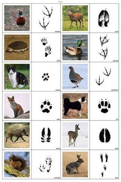 صور تصور آثار الحيوانات البرية للأطفال فورموزوف إيه