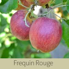 Frequin Rouge