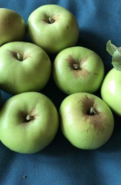 unknown apple