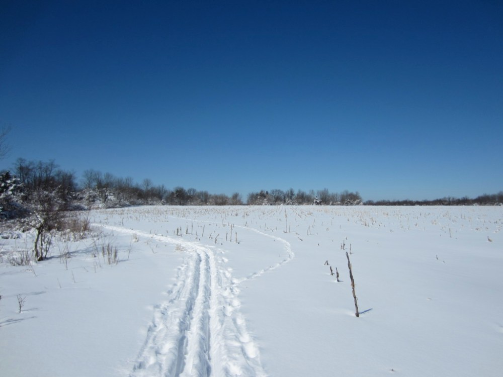 Behind the corn field, it was just me and some deer tracks.  Canon PowerShot ELPH 300 HS f/8 1/640sec ISO-100 4.3mm