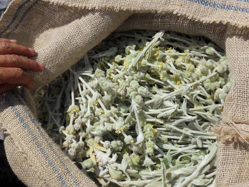 Cretan Mountain Tea