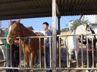 montilivi plus institut girona hípica 2014 -069