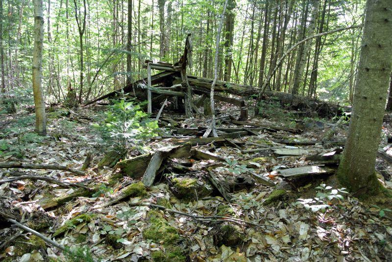 Vestiges dans la forêt