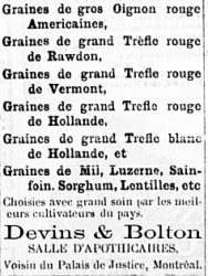 Grand trèfle rouge de Rawdon