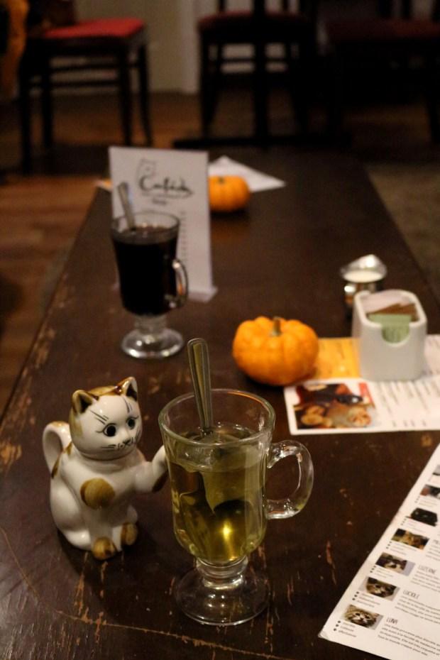 Duluth Cat Café L'Heureux. Photo Lisa Dorche.
