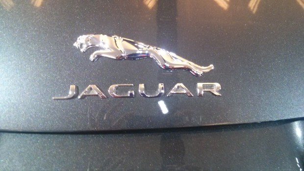 jaguar. photo Nancy Berman