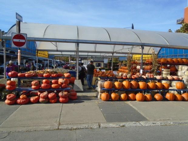 pumpkin weather. Atwater Market. Photo Adam Shaw.