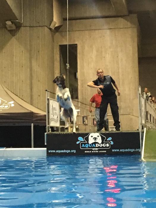 Aqua Dogs. Salon National de Animal Compagnie de Montreal. SNAC. Photo Rachel Levine