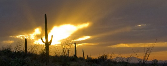 Saguaro cactus backlit by the setting sun with rays against dark clouds