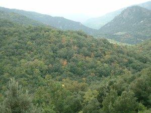 Autumn in the Corbieres