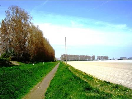 Un polder de la Baie du Mont-Saint-Michel