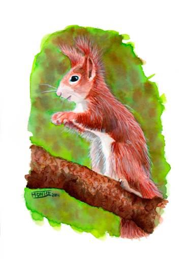 Esquirol | Ardilla | Squirrel (Sciurus vulgaris)