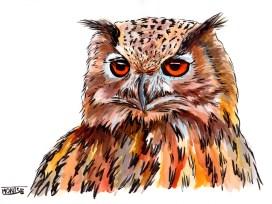 Duc | Búho real | Eurasian eagle-owl