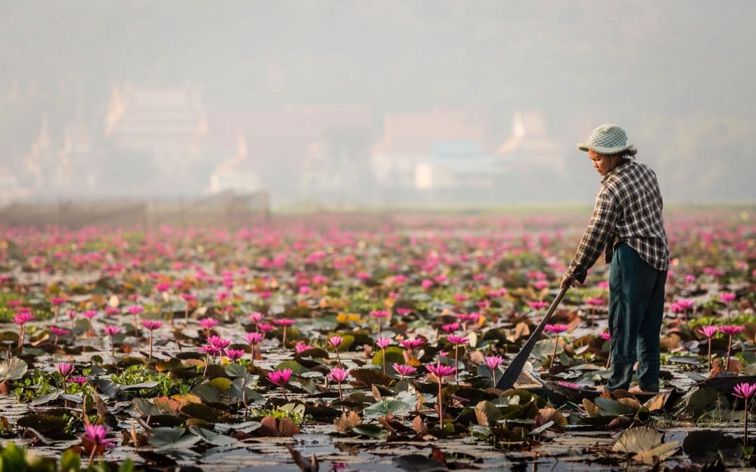Venez pour Angkor et découvrez le Cambodge