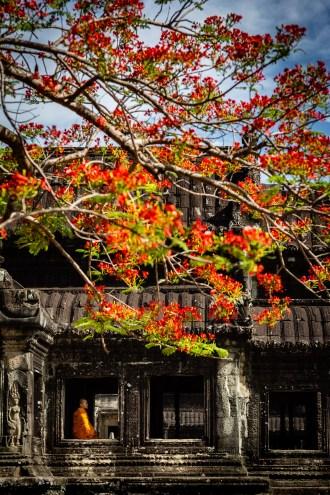 Angkor Wat vide