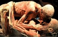 10 حقائق مذهلة لم تكن تعرفها من قبل عن الجسم البشري
