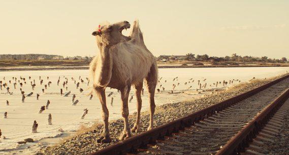 Celestial Camel Mara