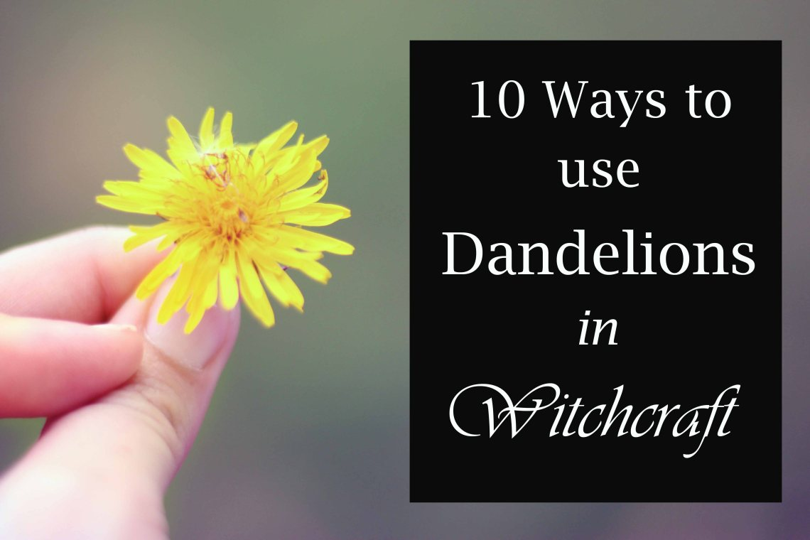 10 ways to use dandelions in witchcraft