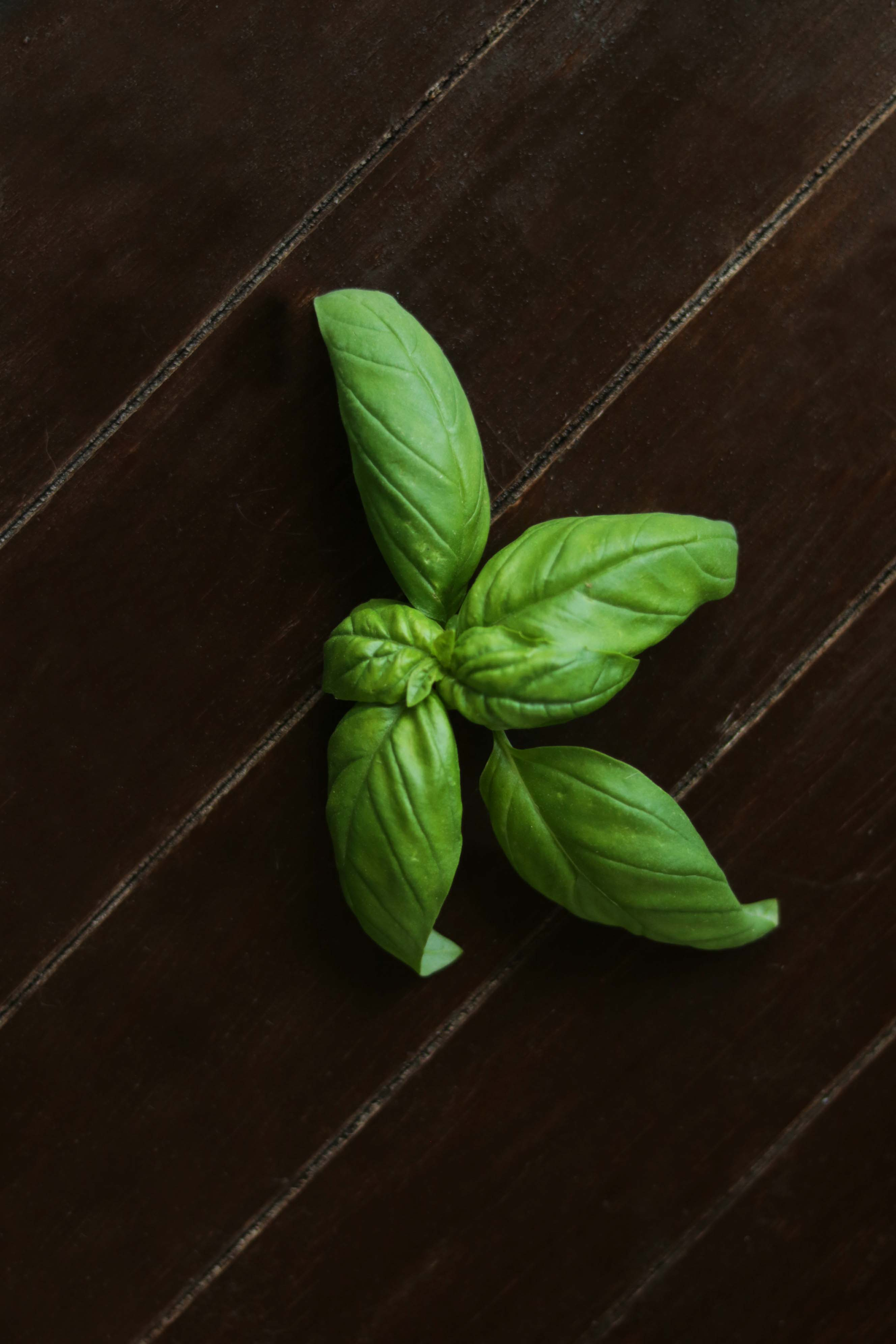 10 Ways to Use Basil in Witchcraft - Moody Moons