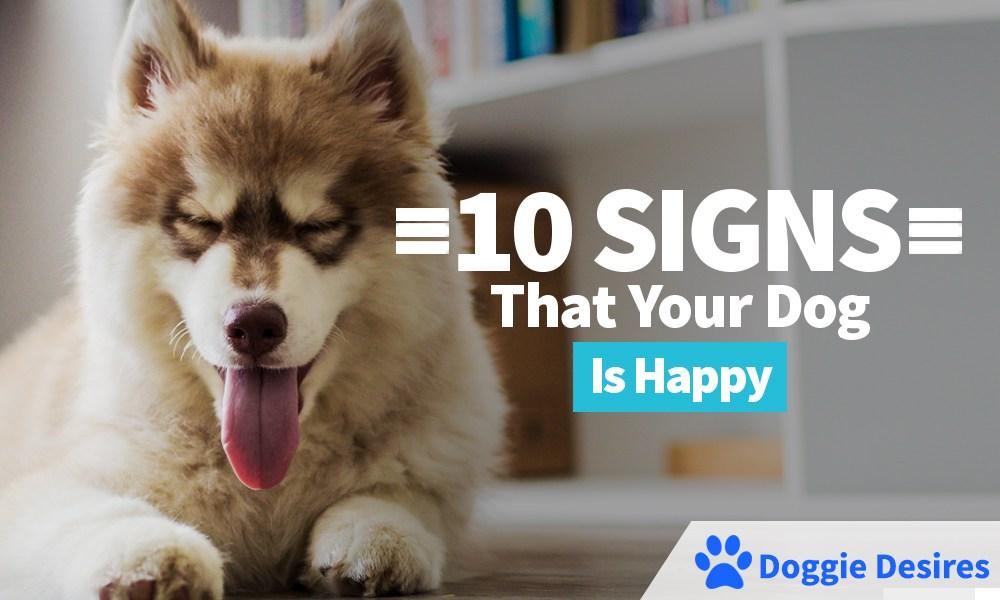 https://doggiedesires.com/10-signs-dog-happy/