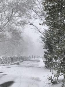 北海道大学ポプラ並木