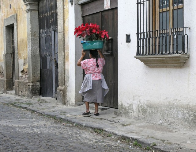 A woman walks down a cobblestoned street carrying a basket full of poinsettias balanced on her head.