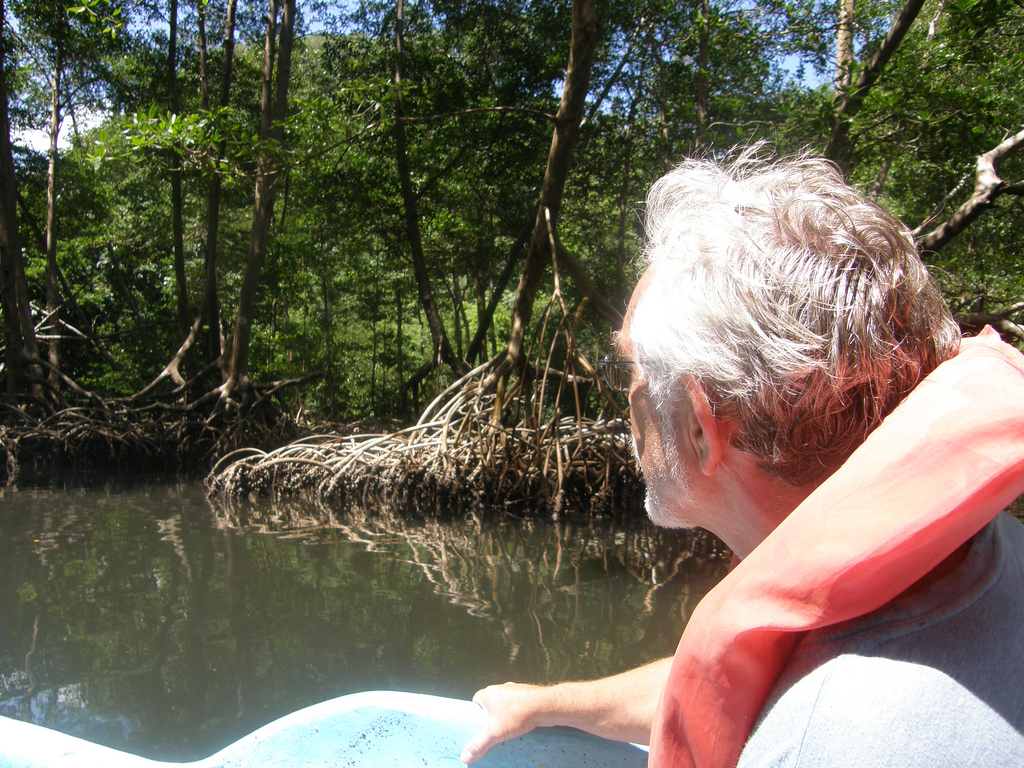 A man wearing a lifejacket rides down the river past the tangled roots of mangrove trees.