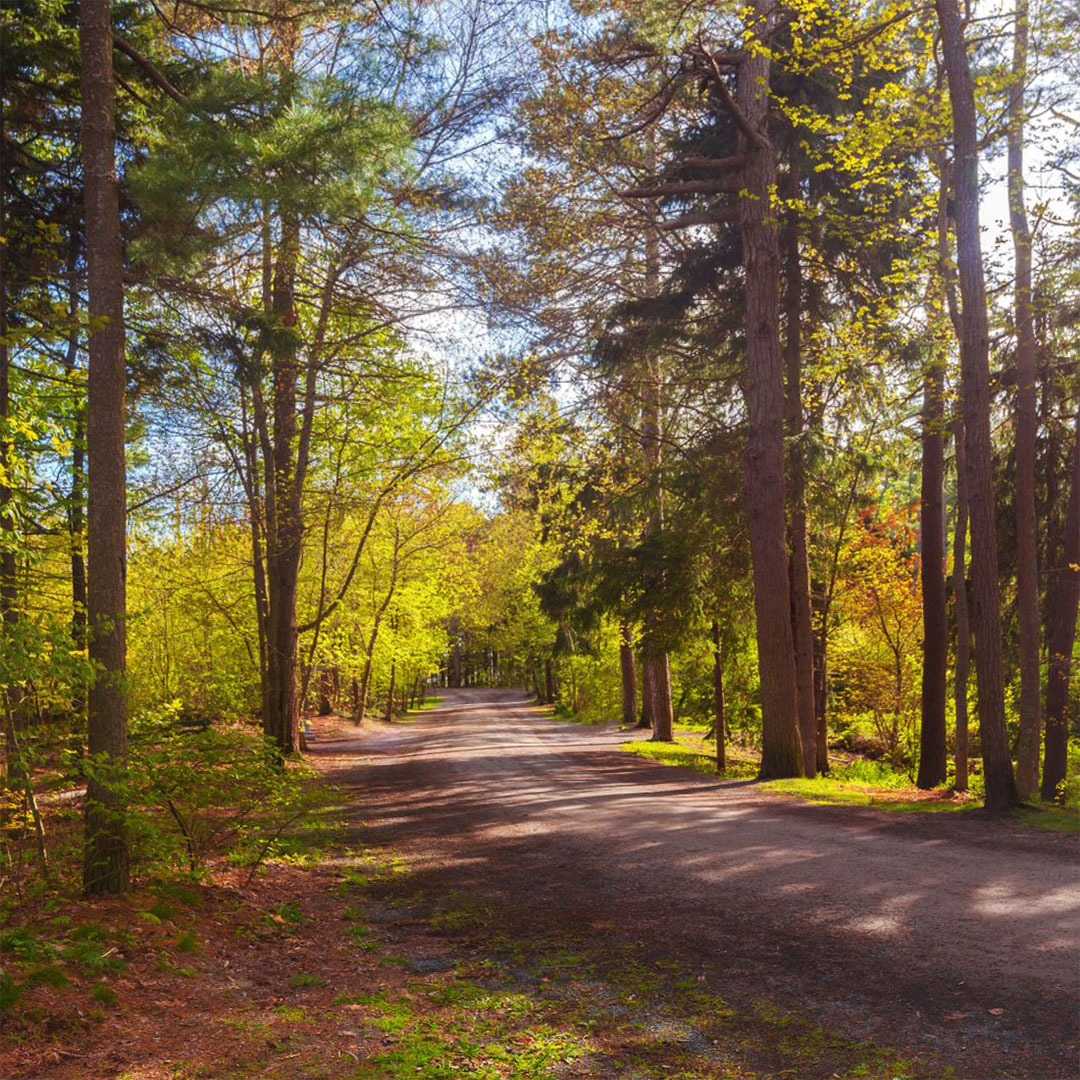 Point Pleasant Park is laced with hiking and biking trails.