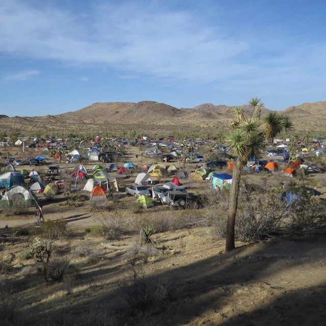 A sea of tents in Joshua Tree's campground. Photo © Jenna Blough.