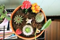 Cactus/succulent garden