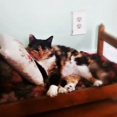 Rosie's bed. <3