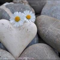 Au coeur d'une pierre blanchie