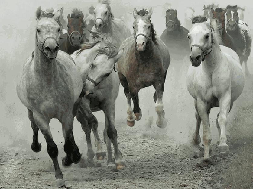 HORSE STAMPEDE copy 2