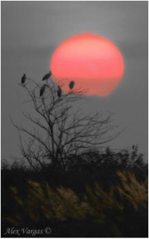 D-2 BIRDS ROOSTING SUNSET