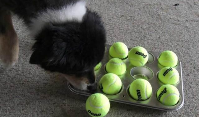 Canine Enrichment