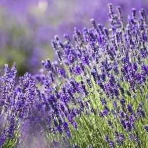 Aroma Therapy | Moondrop Herbals Grand Rapids, MI