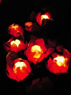 Red lotus shaped Chinese lanterns under the ghost festival