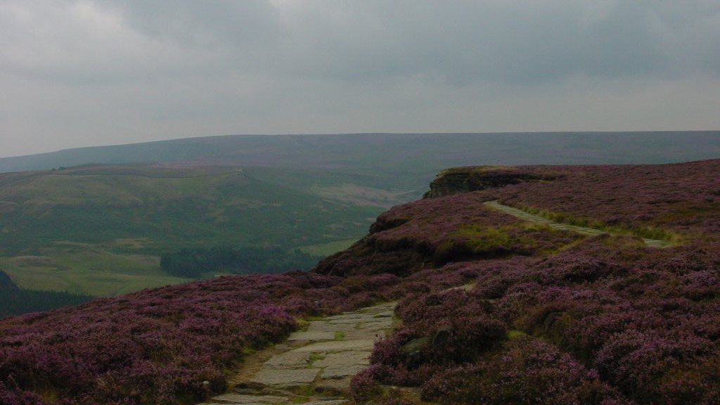 Purple plants on the moor in the mist