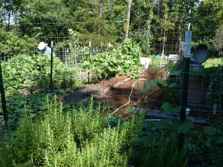 Kitchen Garden from the east.