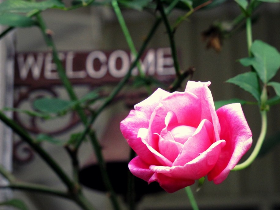 Beautiful flowers will welcome you to Moonriver Lodge!