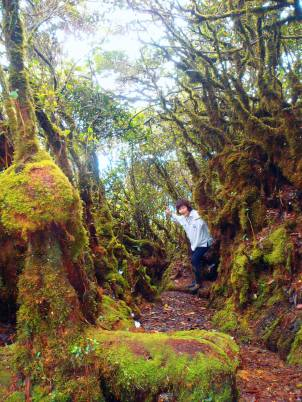 Mossy Forest/Gunung Irau Trek: The mystical beauty of the Mossy Forest