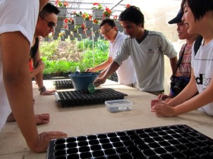 Gardening For Food: Planting seeds