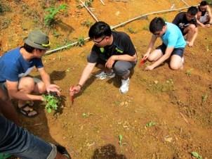 Gardening For Food: Transplanting seedlings at farm terraces